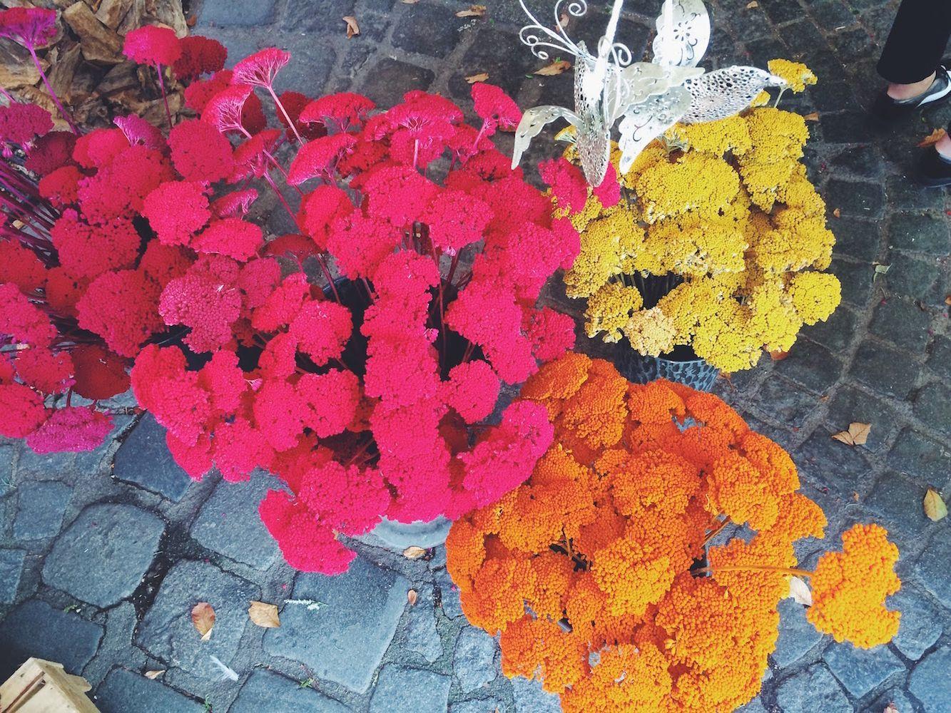 Viktualienmarkt Blumen