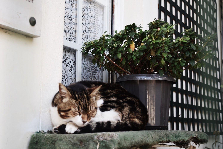 Rue Frochot Cat