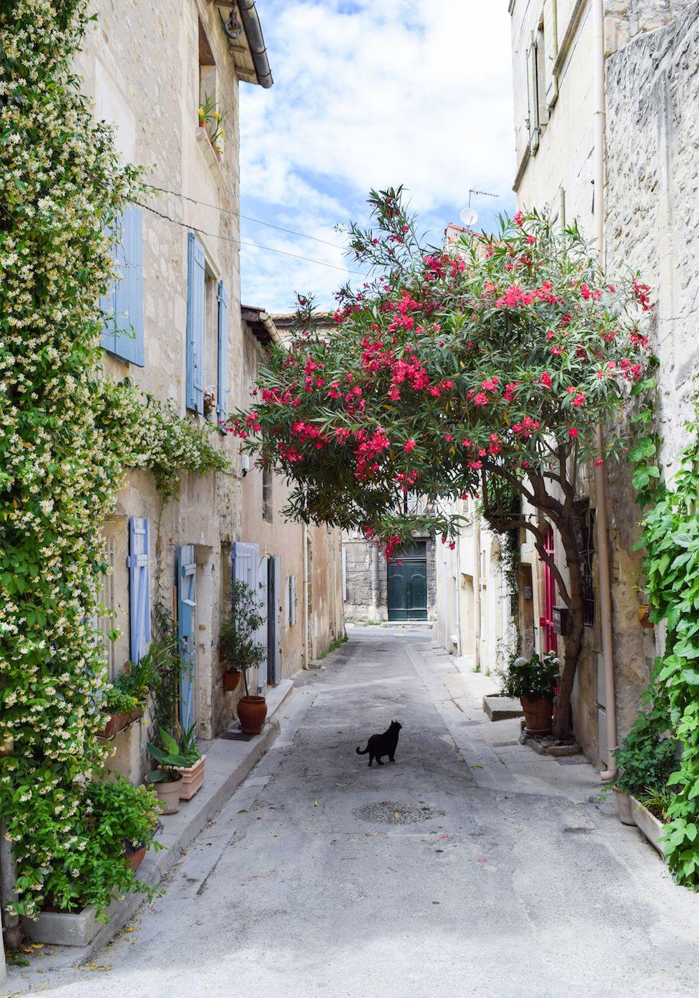 Arles cats