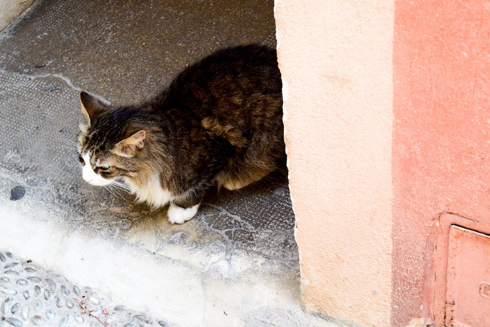 Cat in Menton, France