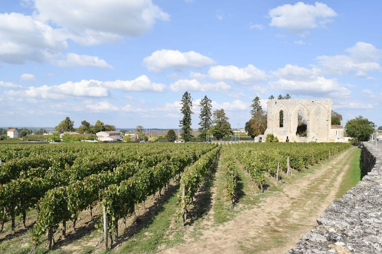 Vineyards Saint-Émilion